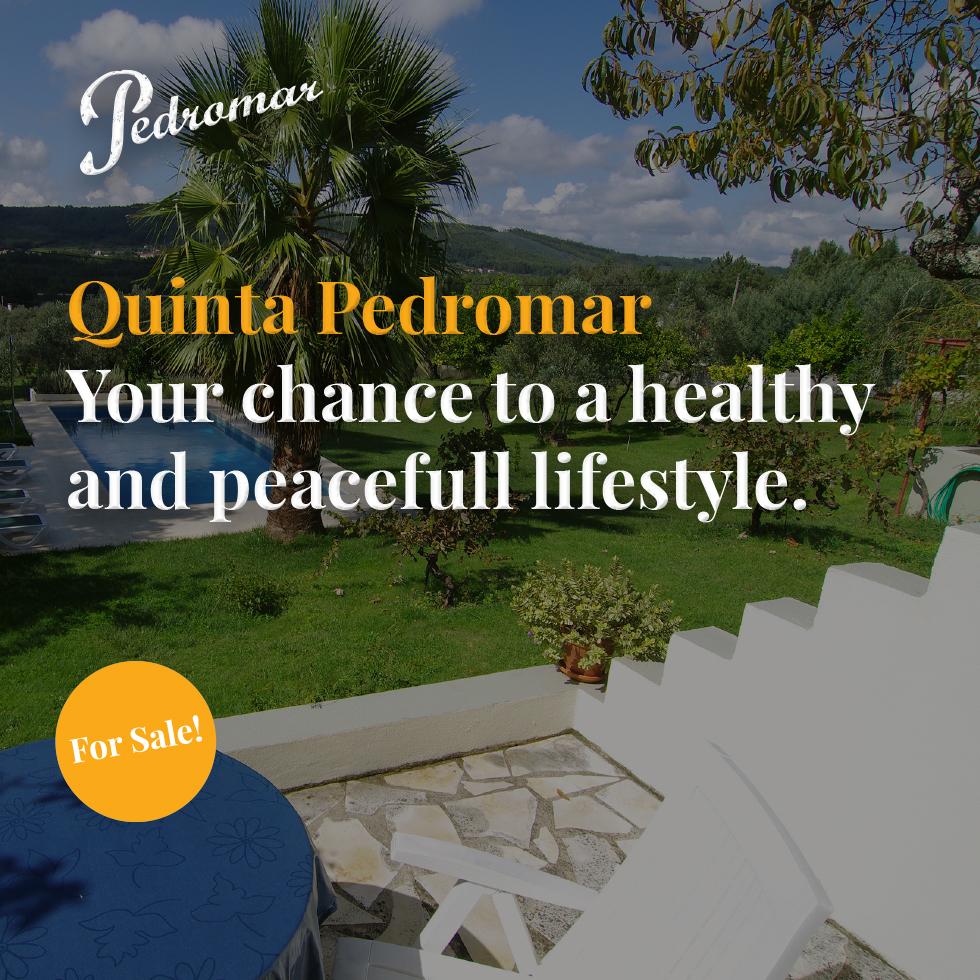 pedro4_portfolio